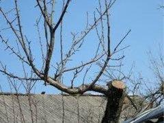 Спил. Обрезка деревьев
