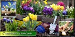 Устройство цветников