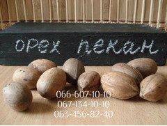 Семена пекана (орех кария) для выращивания саженцев, орехи вкуснее грецких!