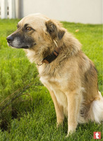 Пес ищет дом и хозяина