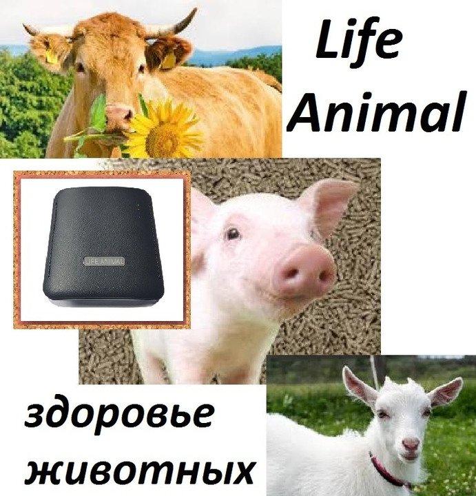 Прибор Life Animal для лечения животных дома.  4 уровня мощности - 1/5
