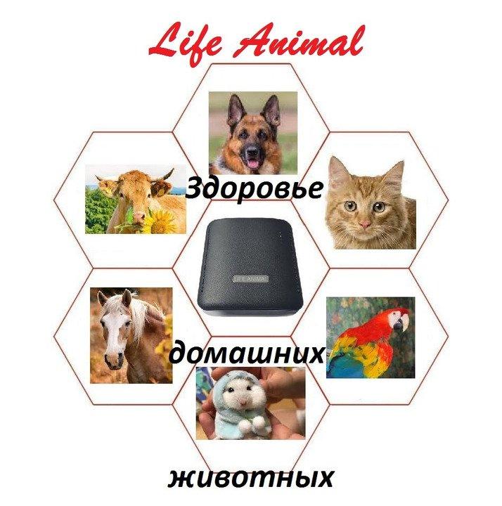 Прибор Life Animal для лечения животных дома.  4 уровня мощности - 3/5