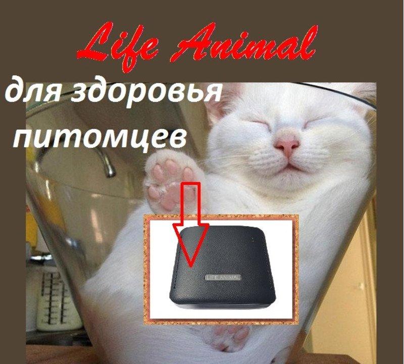Прибор Life Animal для лечения животных дома.  4 уровня мощности - 4/5