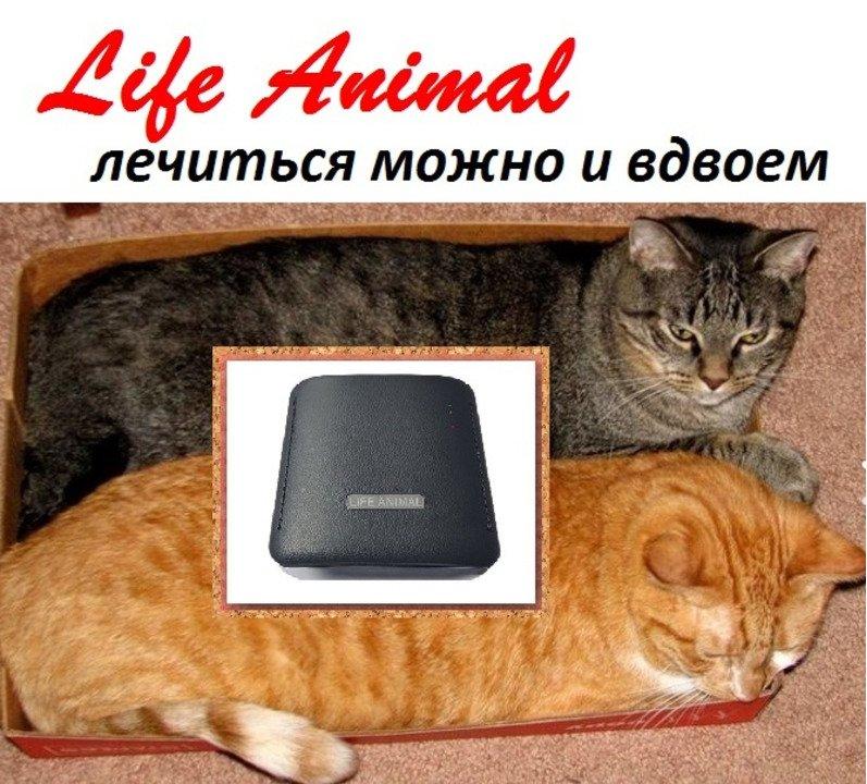 Прибор Life Animal для лечения животных дома.  4 уровня мощности - 5/5